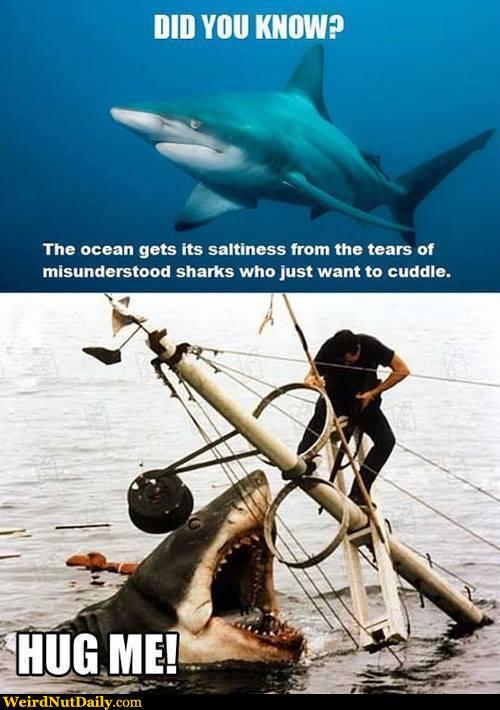 shark tears