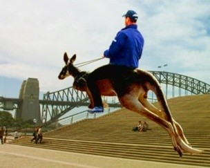 riding-kangaroo