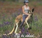 riding-school