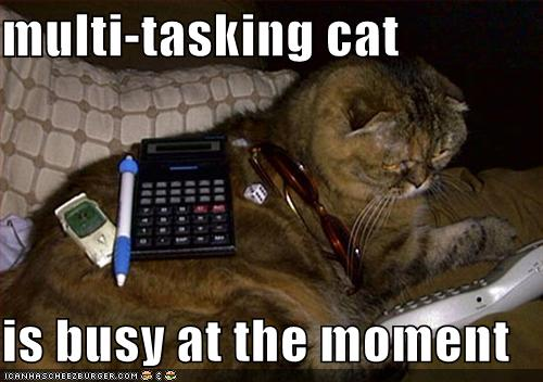 multitasking-cat